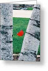 Peeking Tulip Greeting Card