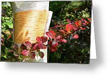 Peeling Bark Of White Birch Tree Greeting Card