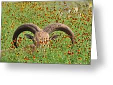 Peep-eye Greeting Card