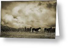 Peeples Valley Horses In Sepia Greeting Card