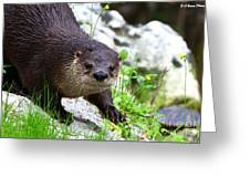 Peering Otter Greeting Card