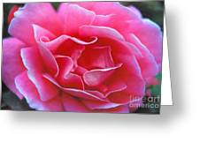 Peggy Lee Rose Bridal Pink Greeting Card