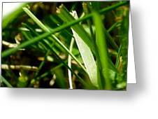 Pei Grass - Bottom Greeting Card
