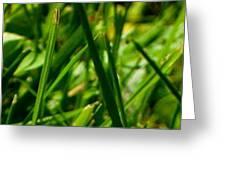 Pei Grass - Top Greeting Card