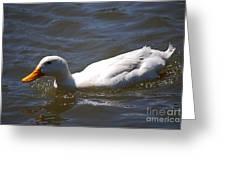 Pekin Duck 20120512_38 Greeting Card