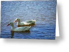 Pekin Ducks 20120515_15 Greeting Card