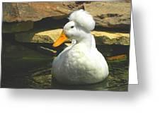 Pekin Pop Top Duck Greeting Card