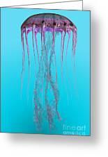 Pelagia Noctiluca Jellyfish Greeting Card