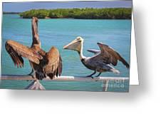 Pelecanidae Greeting Card