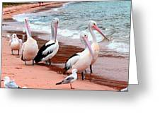 Pelican 5.0 Pearl Beach Greeting Card