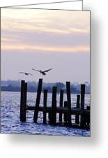 Pelican And Friend  Greeting Card