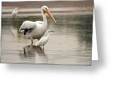 Pelican And Snowy Egret 6459-113017-1cr Greeting Card