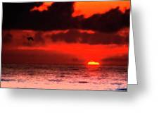 Pelican At Sunrise Greeting Card