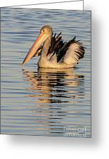 Pelican At Sunset 2 Greeting Card