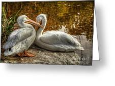 Pelican Bay  Greeting Card