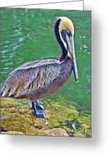 Pelican By The Pier Greeting Card