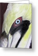 Pelican Closeup 1 Greeting Card