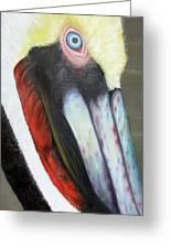 Pelican Closeup 2 Greeting Card