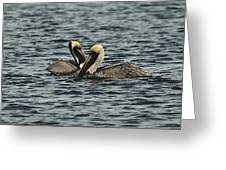 Pelican Couple Greeting Card