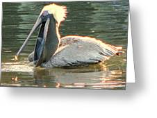 Pelican Dinner Greeting Card