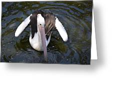 Pelican Down Under Greeting Card