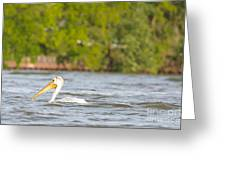 Pelican Drifting Along Greeting Card