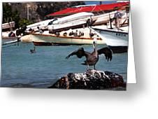 Pelican Drying Wings Greeting Card