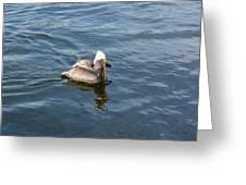 Pelican Eating Dinner Greeting Card