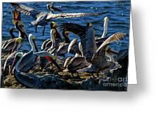 Pelican Fiesta Greeting Card