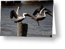 Pelican Fight Greeting Card