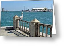 Pelican Gazing At Port Canaveral In Florida Greeting Card