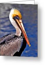 Pelican Head Shot Greeting Card