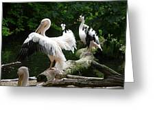 Pelican Hideaway Greeting Card
