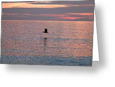 Pelican In Flight At Dawn Greeting Card