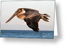 Pelican In Flight At Sunset Greeting Card
