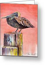 Pelican In Late Afternoon Greeting Card