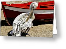 Pelican In Mykonos II Greeting Card