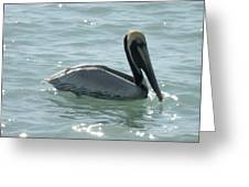 Pelican In The Sparkling Water Greeting Card