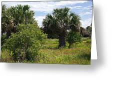 Pelican Island Nwr In Florida Greeting Card