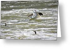 Pelican Landing And Cormorants Greeting Card