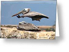 Pelican Leap Frog Greeting Card