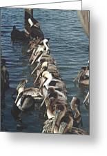 Pelican Line Greeting Card