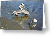 Pelican Love Greeting Card