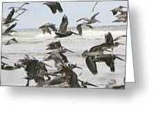 Pelican Migration  Greeting Card