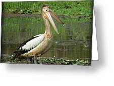 Pelican Mudmasks Greeting Card