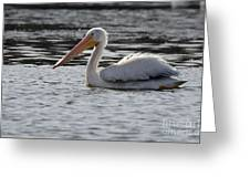 Pelican No 7 4937 Greeting Card