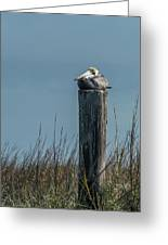 Pelican On A Piling Greeting Card