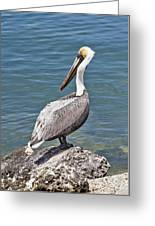 Pelican On Rock Greeting Card