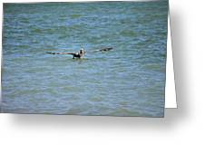 Pelican On The Move Greeting Card