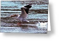 Pelican Skimming The Rock River Greeting Card